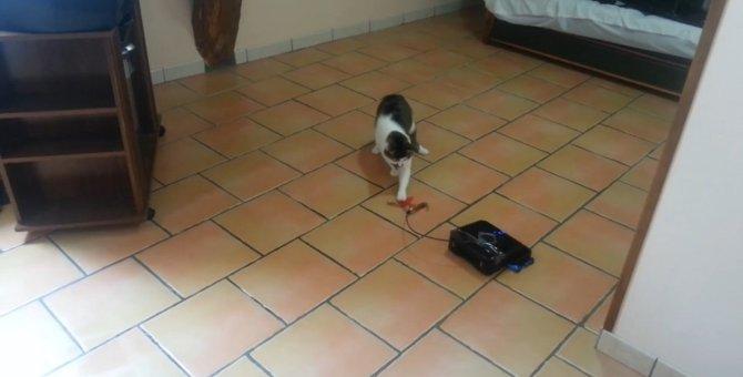 大掃除中はこれに猫ちゃんをお任せしちゃお!