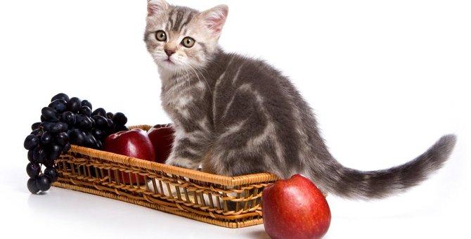 猫に『果物』はOK?与えていい果物とダメな果物5つ!