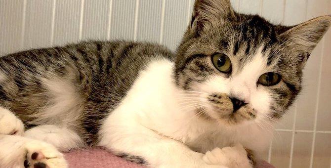 厳冬の夜にひとりで鳴く子猫…幸せな未来へ一歩を進む!