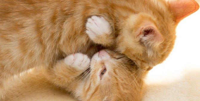 猫が噛む理由5つと正しいしつけの方法
