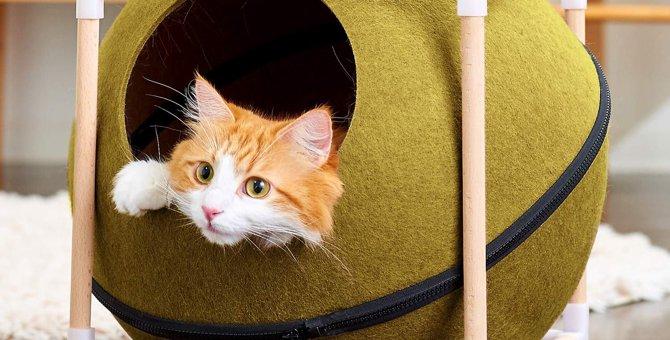 猫ハウスは『くつろげてオシャレ』が肝心!おすすめの商品や選び方をご紹介