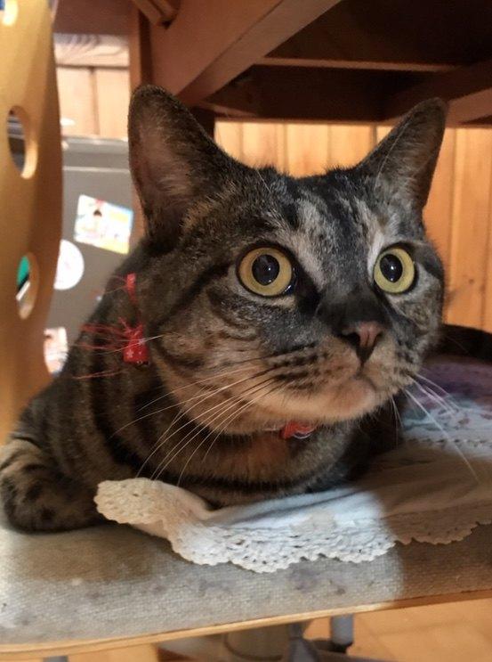 ゆっくり動かすのがコツだった!猫が『ワクワク』するレーザーポインターの動かし方