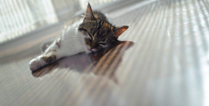 お留守番をする猫は「熱中症」にご用心!今すぐできる暑さ対策とは?
