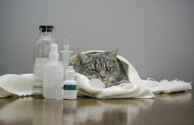 猫にクレゾール(消毒液)が危険な理由と対処法