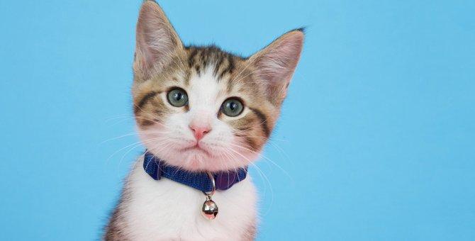 猫に『首輪をつけるメリット・デメリット』4つ