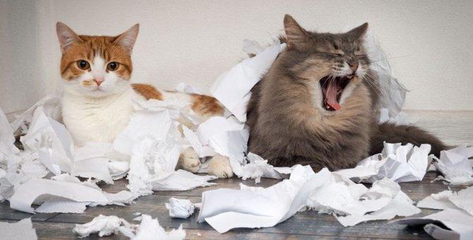 意外な理由も?猫が『ティッシュ』で遊ぶ心理とは?