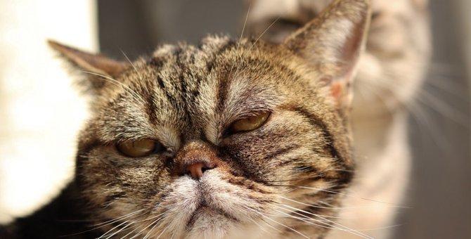 猫がいじけてしまう5つのこと