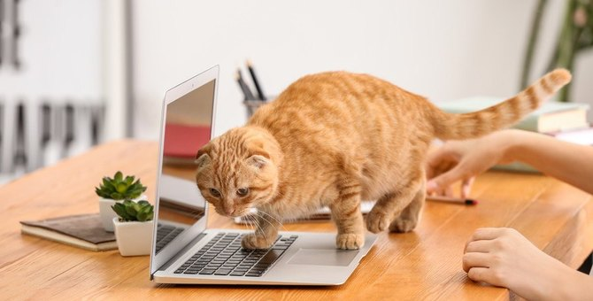 猫の飼い主が『テレワーク』するときに絶対しちゃダメなこと5選!トラブル防止のためにすべき対策とは?