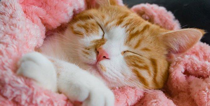 最期の瞬間も穏やかに···猫のQOL(クオリティオブライフ)を考える