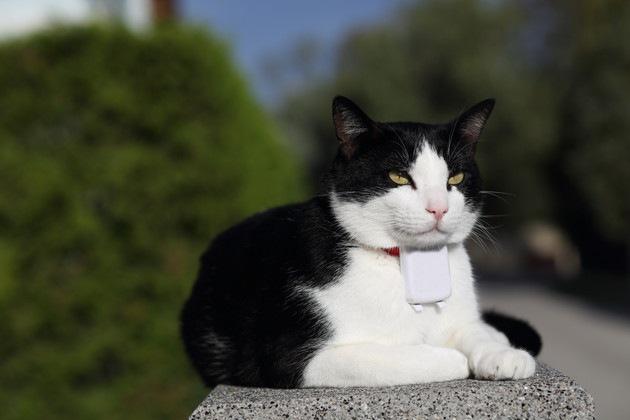 スマホとGPSで猫の居場所が分かる!お勧めの商品3選