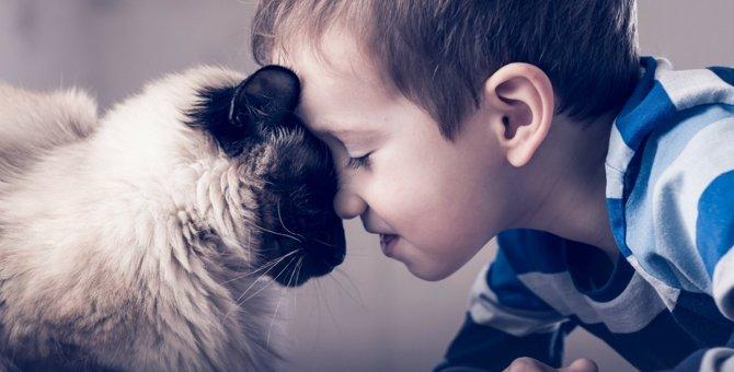 猫の死を早める可能性のあるNGな飼い方5つ
