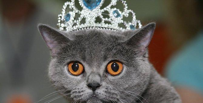 猫が『人間は下僕』と感じている3つの瞬間