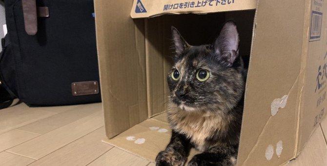 猫の『運気』が上がる飼い方5つ!トイレの置き場所で差が出るかも?