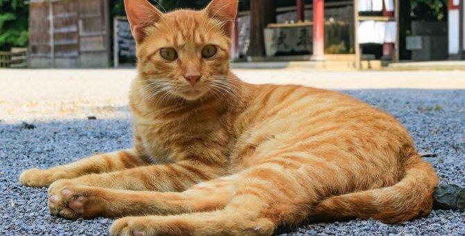 猫を祀る「猫神神社」ってどんなところ?