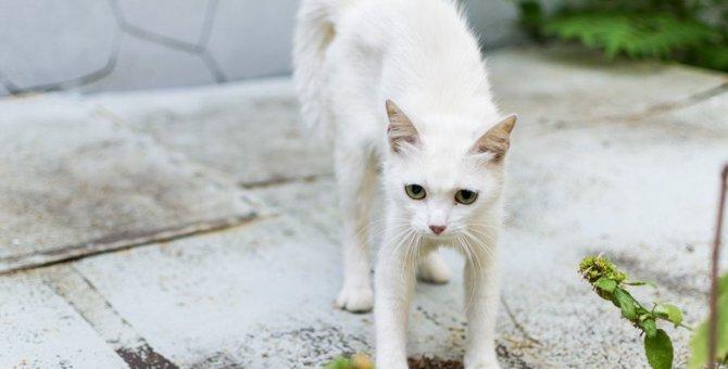 猫の毛が逆立ってるときの心理6つ