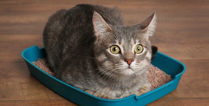 猫の『危険なウンチ』の特徴5つ
