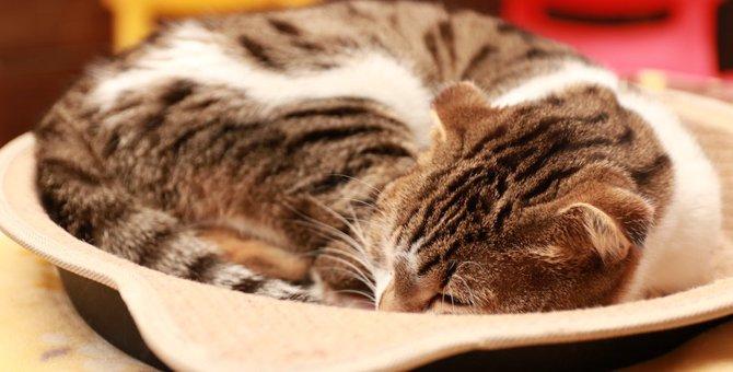 大理石が猫の暑さ対策に有効?大理石を使うメリットやおすすめのひんやりグッズを紹介