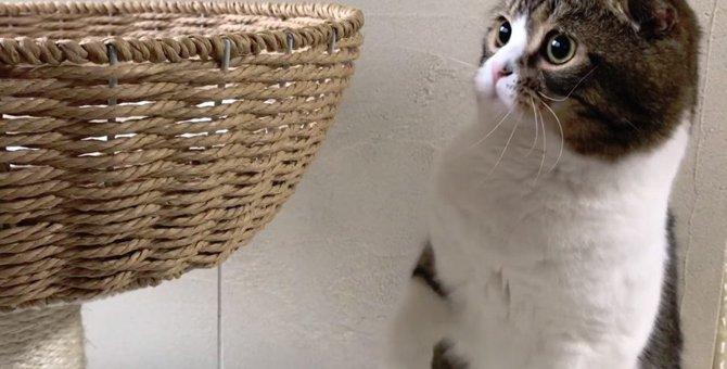 お気に入りのキャットタワーを守る猫さん!