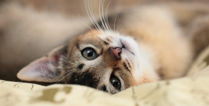 猫がいる部屋で殺虫剤を使っても大丈夫?使いたくない時の対処法