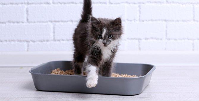 猫が下痢をする原因と考えられる病気