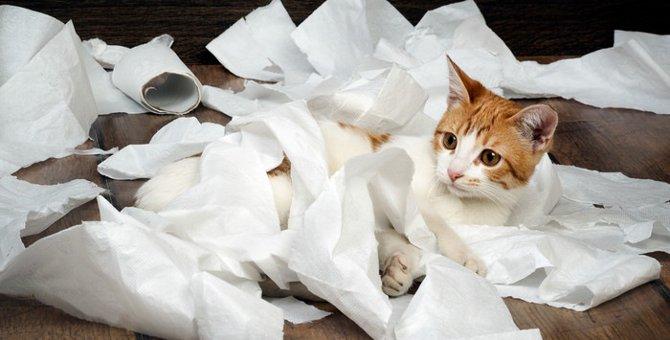 猫がトイレットペーパーでイタズラをする理由とやめさせる方法