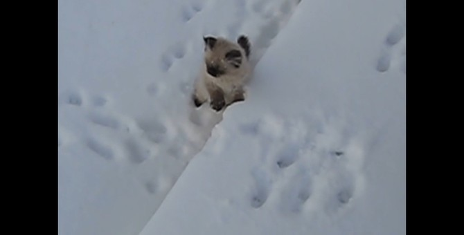 あー冷たかった!雪の冷たさに耐えられなくなった子猫ちゃん、飼い主さんにしがみつく