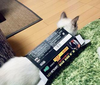 シュールな猫たちが愛らしい!おもしろ写真と動画をご紹介
