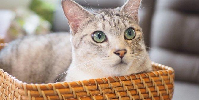 猫が喜ぶ『猫ちぐら』初心者でも簡単にできる作り方を紹介!