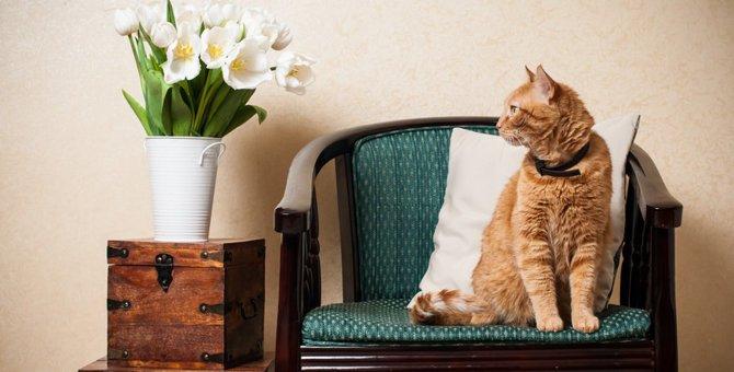 猫はお留守番が得意?