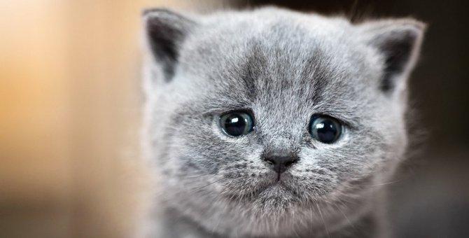 猫がいるお家で葬儀をする時は?知っておきたいマナー