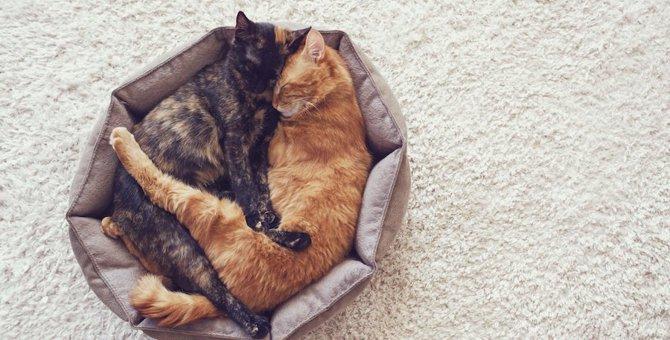 歳の差あるある♡先輩・後輩猫がよくするかわいい仕草5選
