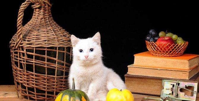 猫はマンゴーを食べても大丈夫?与える時の注意点