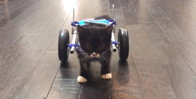 片脚を失い生死の世界を彷徨った子猫!車椅子で感動の第一歩