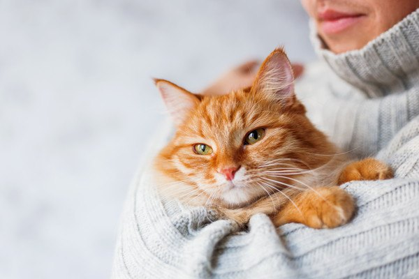 エキノコックスが猫に感染した時の症状や検査の方法