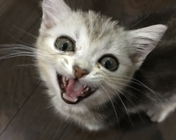 思わずお返事♡猫が反応しちゃう6つの言葉