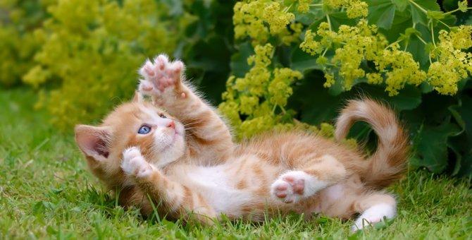 猫が突然興奮するのはどうして?7つの気持ち