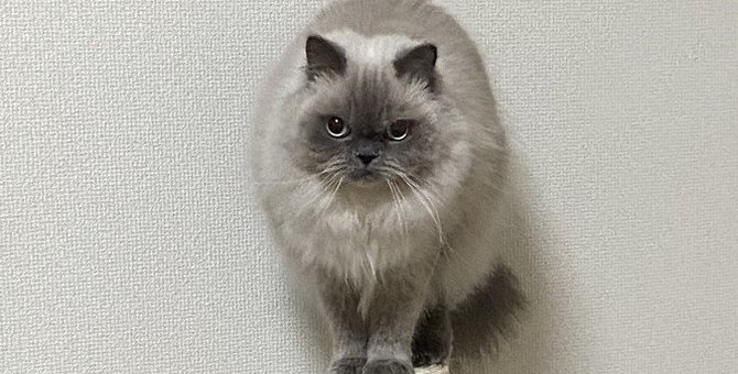 猫の『免疫力』が下がる4つの原因と予防策