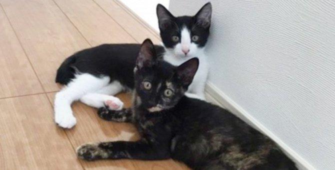 人見知りが激しい兄弟猫…優しい家族と出会い幸せに♡