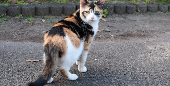 猫が走っている時に急に立ち止まる3つの理由