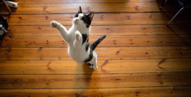 遊びたく無い?体調不良?猫が『ジャンプしない』ときの原因5つ