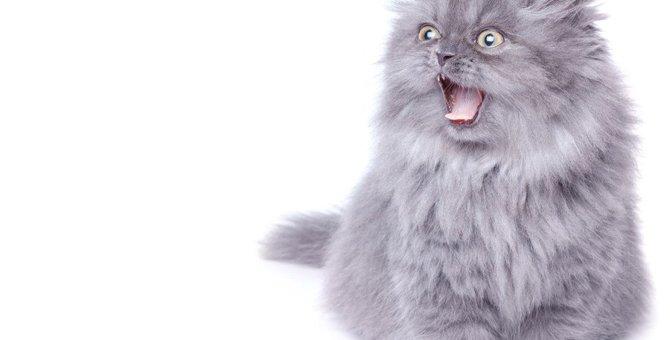 猫に構ってはいけない5つのタイミング。間違えると大変なことになる場合も…!