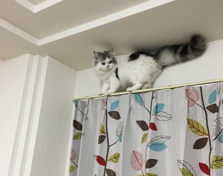 猫はなぜ高いところから降りられなくなる?
