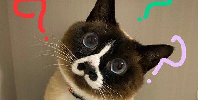 可愛いにも程がある!首を傾げるあざと猫さんにTwitter民悶絶