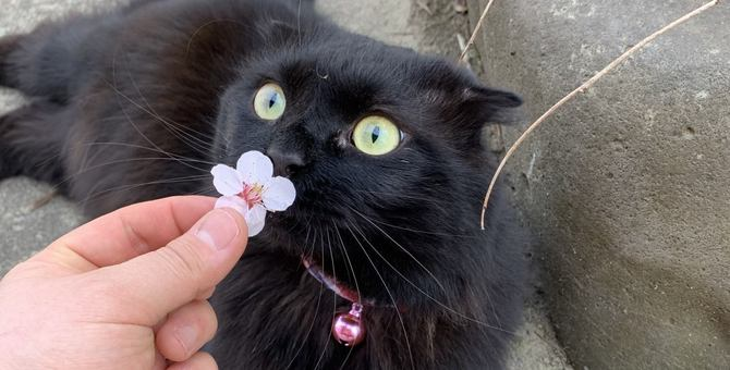 猫に『安心感』を与える飼い主の行動5つ!不安にさせないために注意すべきことは?