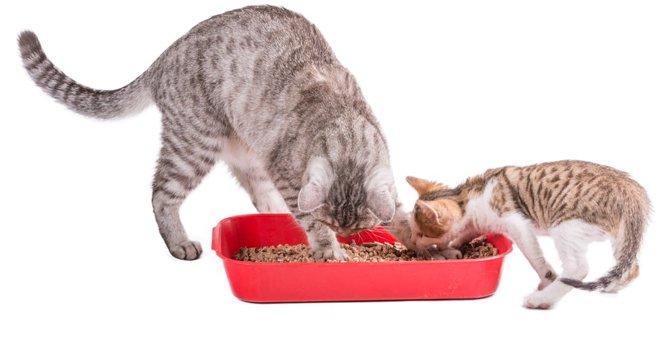 おからの猫砂の特徴や使う時の注意点、おすすめ商品