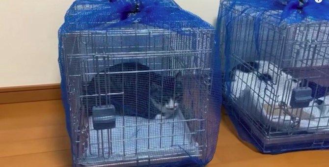 痩せ細った野良猫の親子…緊迫する保護現場の声とは?No.2