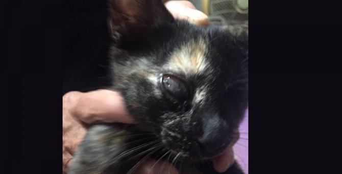 【奇跡の救出】危険な車道にうずくまっていた猫をレスキュー