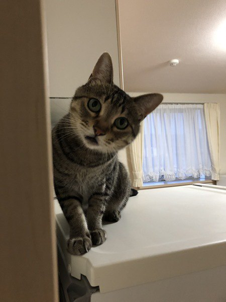 なぜ猫は玄関で飼い主を待つのか?ずっとそこで待ってる可能性は?
