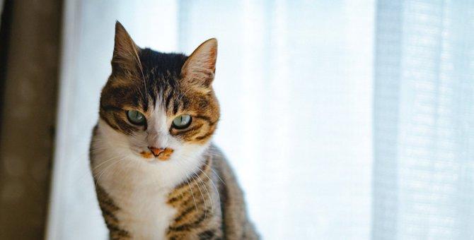 必見!猫ちゃんに好かれるためには?5つの方法で仲良くなろう