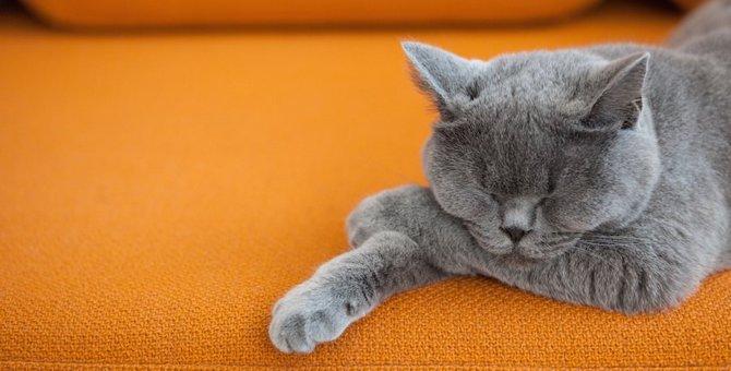 猫に強いソファおすすめ商品4つ!